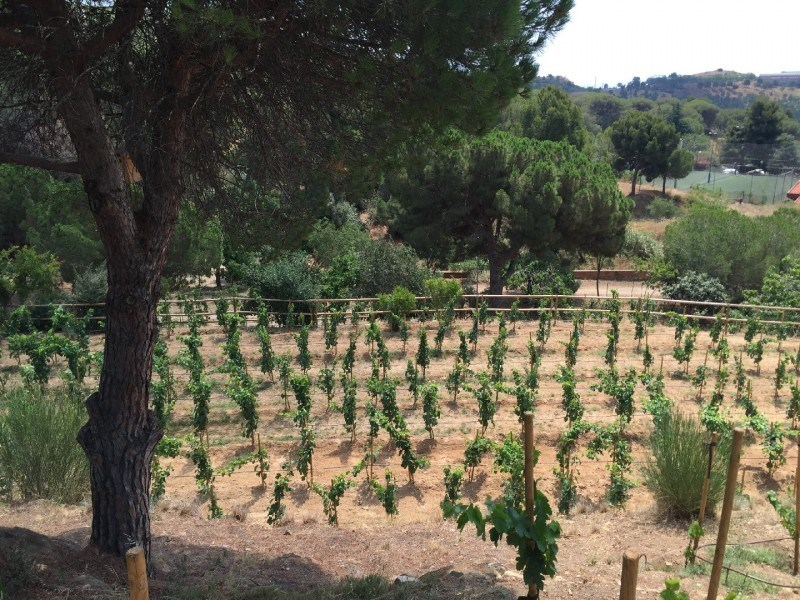 La Vinya d'en Sabater · Open Kitchen