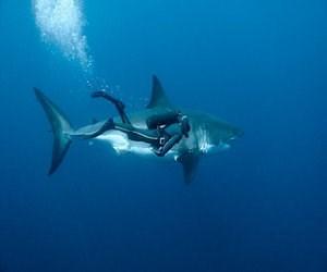 'Oceans, l'últim territori salvatge' al Museu Blau. Fins al 14 de setembre.