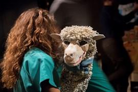 EXCALIBUR I ALTRES HISTÒRIES D'ANIMALS MORTS